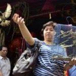 Tradisi Fang Sheng, Antara Ritual Dan Pelestarian Satwa