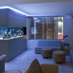 Energi Aquarium Dalam Feng Shui