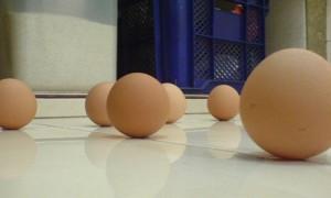fenomena_telur_berdiri
