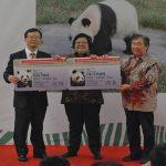 2 Panda Raksasa Asal Wolong Tiba di Indonesia – Simbol Hubungan Erat Negeri Tirai Bambu – Indonesia